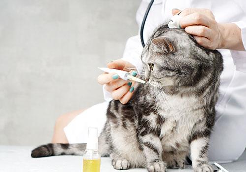 medicina interna per cani e gatti